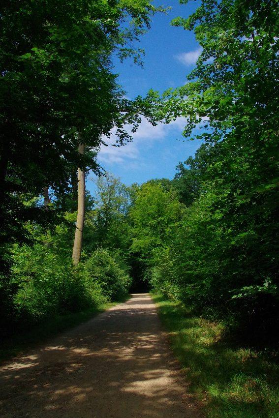 Wanderung durch den Woldofer Wald
