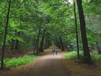 Der Sachsenwald ist im Hamburger Umland. Die Bäume sind alt und dementsprechend hoch. Ein tolles Erlebnis für Kinder. Ein umfangreicher Artikel über dieses schöne Fleckchen Erde in Schleswig-Holstein folgt selbstverständlich noch.