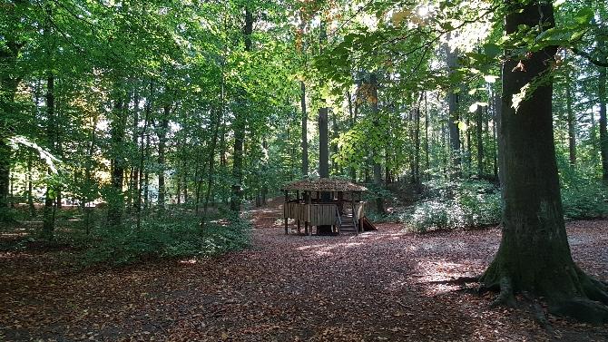 Bild: Spielplatz im Wald
