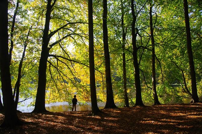 Bild: Wald im Herbst