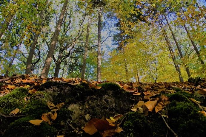 Viel Laub am Boden. In wenigen Wochen werden alle Blätter von den Bäumen am Boden liegen und der Wald wird ganz anders aussehen.