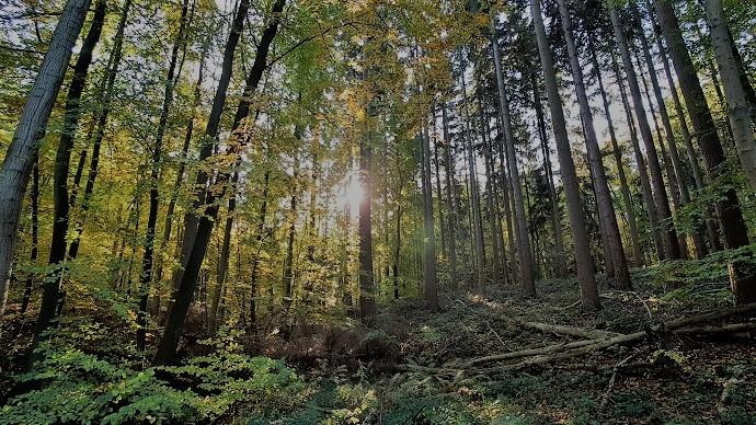Schön wenn die Sonne durch den Wald schimmert.